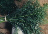 Укроп пучком на зелень