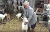 История про 26 коз